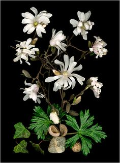 White, Ivory and Neutral Colored Plants, Scanner Photography,... - Scanner Photography By Ellen Hoverkamp