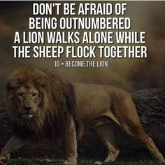 For more of the best motivation out on Instagram be sure to follow our friends @become.the.lion @become.the.lion Tag your friends. by businessmindset101