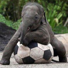 Oh my gosh it's an elephant!
