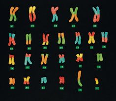 This blog has ideas for teaching science through snack foods. Chromosomes via gummi worms.