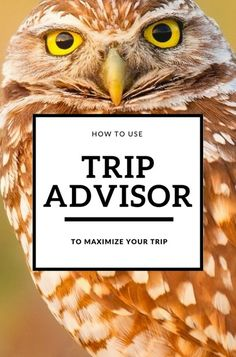 Millions of travelers already love TripAdvisor for their reviews, but now you can book your whole trip. Learn how to use TripAdvisor to maximize your trip! #travel via @mappingmegan