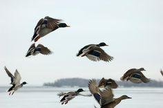 """Happy as a duck in water"""