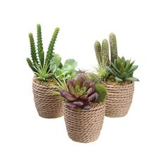 3-Piece Faux Succulent Set ❤ liked on Polyvore featuring home and home decor
