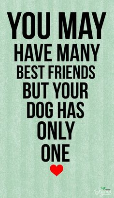 Best Inspirational Quotes About Life QUOTATION - Image : Quotes Of the day - Life Quote You may have many best friends but your dog has only one. I Love Dogs, Puppy Love, Cute Dogs, Mans Best Friend, Best Friends, Dog Friends, Bestest Friend, Dog Best Friend Quotes, Dog Quotes Love