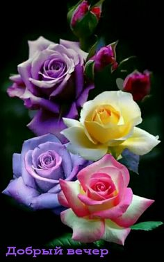Flowers Beautiful flowers Rose B Beautiful Flowers Wallpapers, Beautiful Rose Flowers, Pretty Roses, Flowers Nature, Exotic Flowers, Amazing Flowers, Pretty Flowers, Love Rose Flower, Purple Flowers