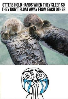 Cuteness Overload Meme Collection - The best of the Cuteness