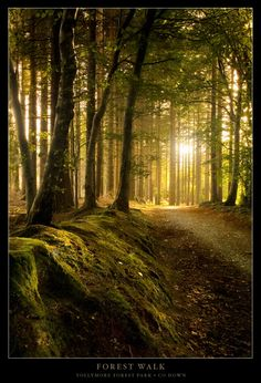 Forest Walk - Newcastle, Down, Northern Ireland Copyright: Gary McParland