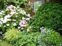 wenn das neben dem Haus bei uns auch mal so schön aussieht..... Hortensien und Frauenmantel. Eventuell noch Funkien, Farn und wenns mitspielt - Schleierkraut.