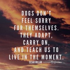 Wise words from Cesar Millan! #quotes