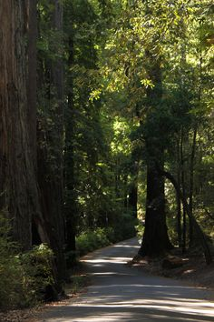 Big Basin Redwoods State Park  Heaven on Earth!