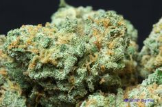 Green Crack ~ Don't let the name fool you: this is pure cannabis.  Repinned by Fun Weed Pics @funweedpics