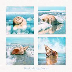 seashell print set, seashell photo, seashell photography, seashell prints, seashell art, seashell decor, seashells decor, sea shell print Seashell Painting, Seashell Art, Surf Art, Beach Crafts, Ocean Art, Beach House Decor, Beach Art, Coastal Decor, Sea Shells