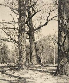 andrew wyeth drawings - Google Search