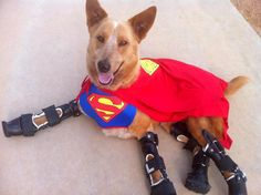 The Bionic Dog: Naki'o Thrives with Four New Prosthetic Paws   http://www.dogster.com/the-scoop/bionic-dog-nakio-prosthetic-paws