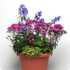 I am loving this site! Ideas for beautiful mixed potted plants and flowers with instructions and blueprints. Perennials and annuals!