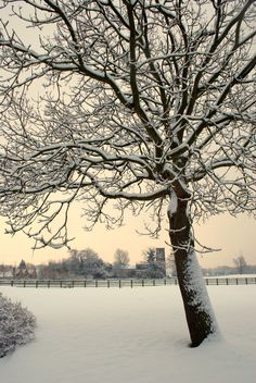 Snowy tree, Stanford-On-Soar, December 2010