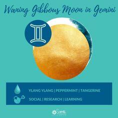 Waning Gibbous Moon in Gemini #waninggibbous #moon #gemini #lunar #lunarselfcare #moonmagick Social Research, Lunar Phase, Moon Magic, Natural Energy, Peppermint, Gemini, Astrology, Essential Oils, Mood