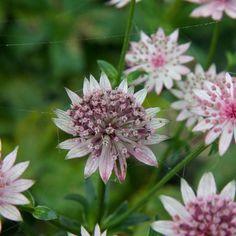 10 plants that do well on clay soil - GroenVandaag English Country Decor, English Cottage Style, Outside Plants, Backyard Plan, Purple Garden, Clay Soil, Dream Garden, Amazing Gardens, Garden Inspiration