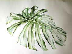 Botanical illustration by J R Shepherd. The art and science of plant illustration, painting and drawing. Botanical Drawings, Botanical Art, Painted Leaves, Watercolor Leaves, Plant Illustration, Painting & Drawing, Plant Leaves, Monstera Leaves, Graphic Art