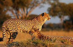 African Animal - http://whatstrendingonline.com/african-animal/