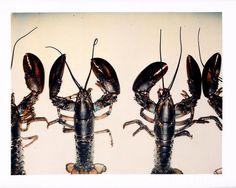 Andy Warhol Lobsters, 1982 polaroid photograph 3 1/4 x 4 inches; 8.3 x 10.2 cm PK 12411