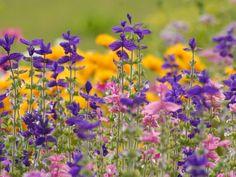 полевые цветы -03