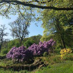 Lovely colours @ntstourhead. . . . . . #stourhead #nationaltrust #views #gardens #landscape #blossom#colours #spring #nature #colourpop #colourinspiration Spring Nature, National Trust, Color Inspiration, Gardens, Colours, Landscape, Plants, Instagram, Garden