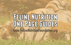 Feast your eyes on this amazing collection of One Page Guides, courtesy of FelineNutritionFoundation.org! Each One Page Guideis a convenient,...