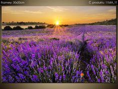 Tištěný obraz Levandulové pole 1154A_1T (Různé vel