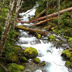 Some beautiful creek along canyon creek. Gifford Pinchot National Forest, WA
