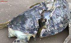 Singapura desenvolve diretrizes para proteger animais marinhos de embarcações