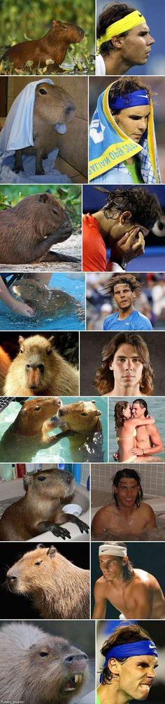 Capybaras That Look Like Rafael Nadal