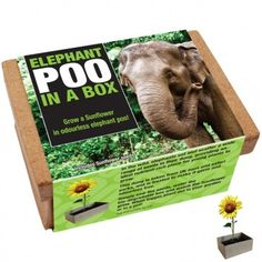 Poo in a Box