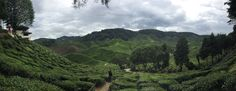 Cameron Highlands is one of the great place I have been in Malaysia. Weather is really nice and cool. I wish I could visit there again and stay longer.