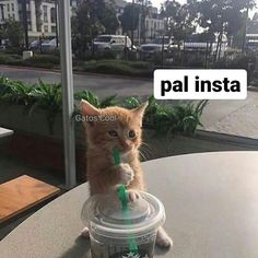 "Gatos Cool en Instagram: "". . . . #gatoscool😸 #gatos_cool #memesdegatoscool #insta #instagram"""