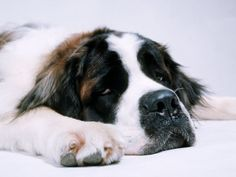 When you feel dog tired at night, it may be because   you've growled all day long - author unknown