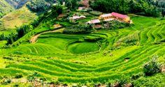 terraces in norther vietnam