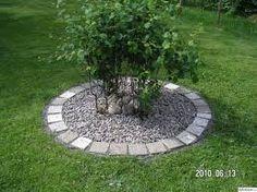 Bildresultat för plantering runt träd