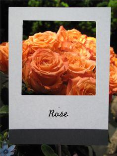 バラ   #flower #shop #matilda #中目黒