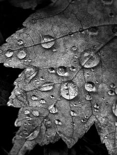 this picture represents value because there are different shades of black or grey and also because there are highlights in the water droplets. the darkness also brings out the leaf or the lite color of the leaf.