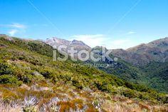 Mt Arthur, The Kahurangi National Park, New Zealand Royalty Free Stock Photo Beech Tree, Photo Tree, Image Now, New Zealand, National Parks, Southern, Royalty Free Stock Photos