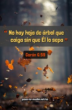 #Corán #señor #Dios Islam, Autumn Photography, Quran Verses, Ramadan, Knowledge, Movie Posters, Eid, Falling Down, Motivational Quotes