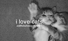 I will be a cat lady when I'm older. Me and Haz and our 27 cats. Yep. It could happen. ;)