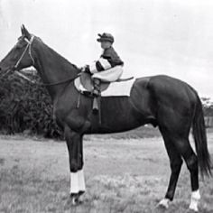 Phar Lap - wow the contrast with his tiny jockey