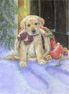 Dog --- Christmas Donna Race