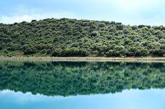 El verde y el green  Laguna Lengua #nature #photography