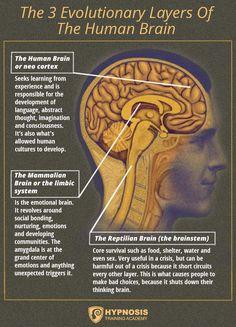 3 evolutionary layers human brain