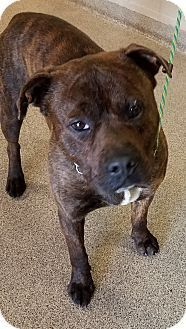 I am at a full, kill shelter in Troy, OH - Pit Bull Terrier Mix. Meet Niffler, a dog for adoption. http://www.adoptapet.com/pet/17913012-troy-ohio-pit-bull-terrier-mix