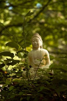 Do Buddhist meditation techniques work