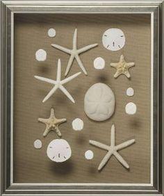 Custom framed Sea Shells.